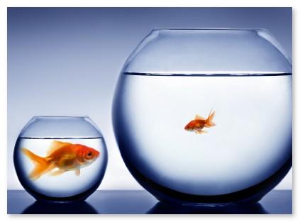 peces y peceras